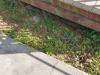 04-emailer-garden